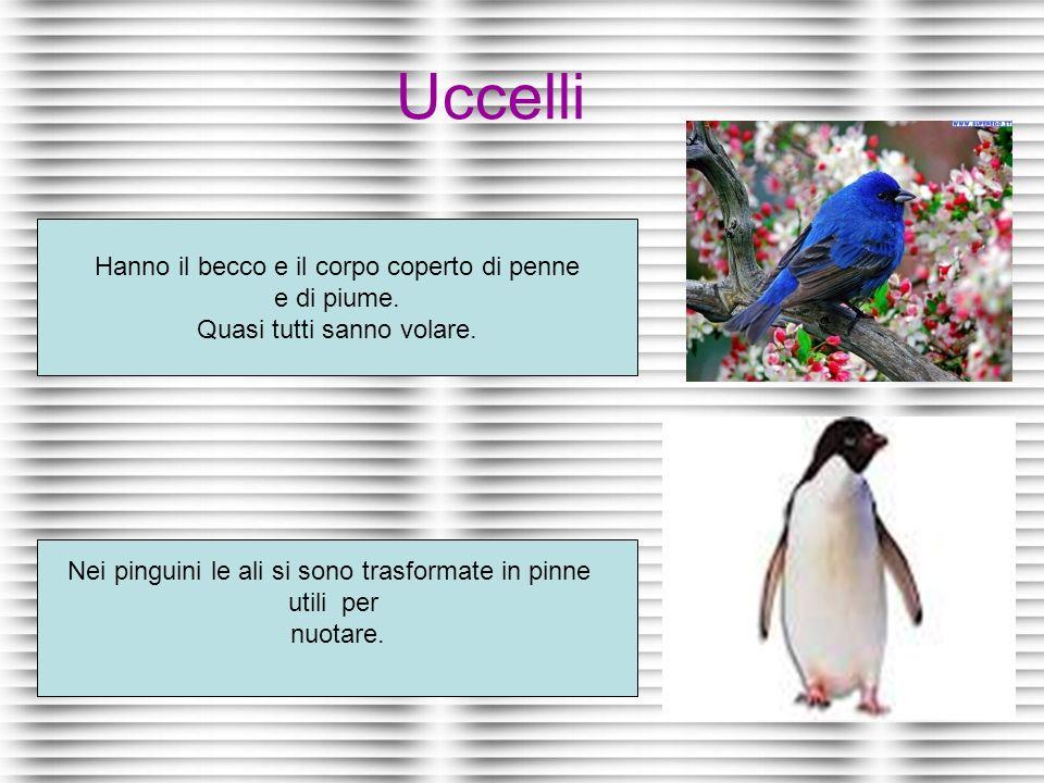 Uccelli Hanno il becco e il corpo coperto di penne e di piume.