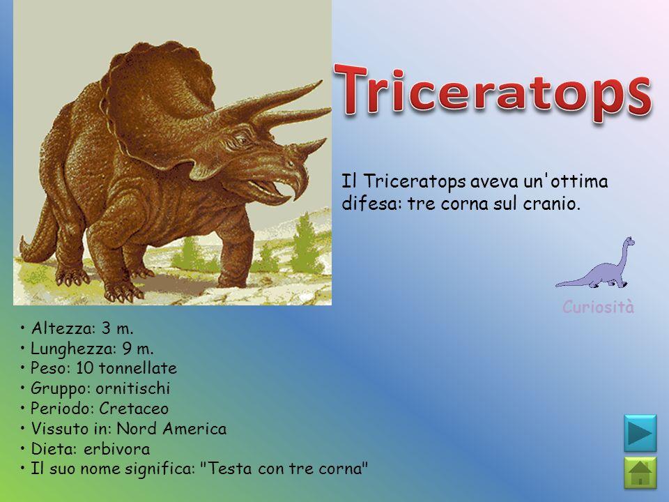 Triceratops Il Triceratops aveva un ottima difesa: tre corna sul cranio. Curiosità. • Altezza: 3 m.