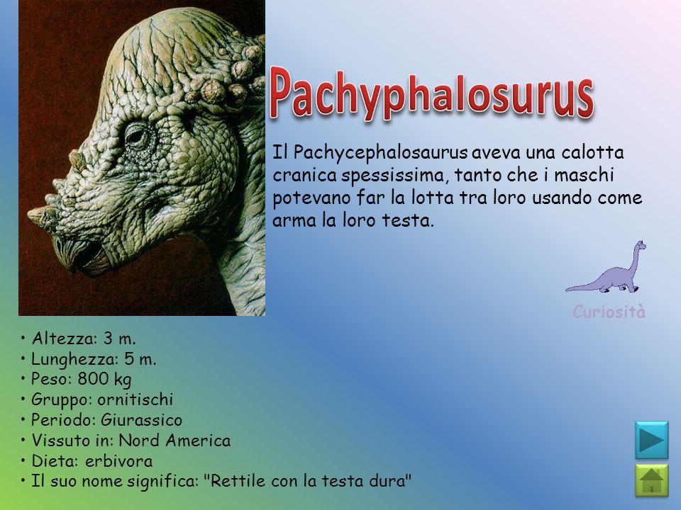 Pachyphalosurus