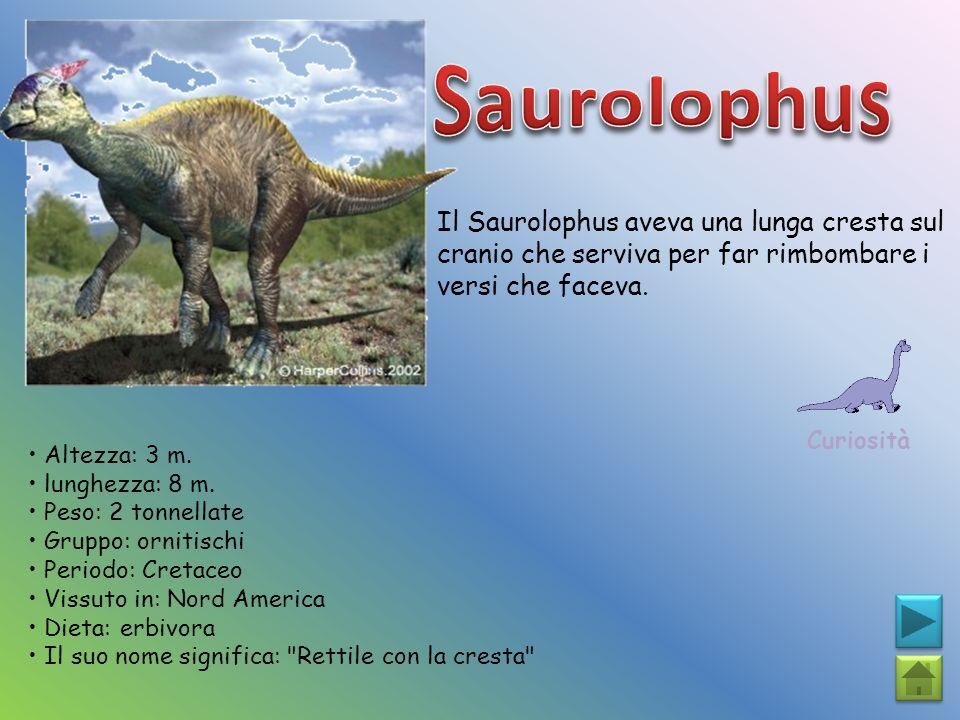 Saurolophus Il Saurolophus aveva una lunga cresta sul cranio che serviva per far rimbombare i versi che faceva.
