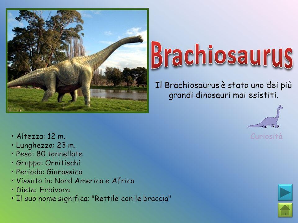 Il Brachiosaurus è stato uno dei più grandi dinosauri mai esistiti.