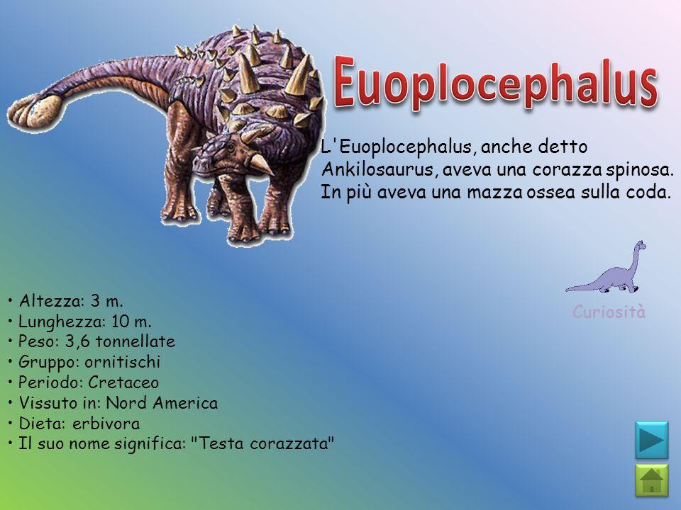 Euoplocephalus L Euoplocephalus, anche detto Ankilosaurus, aveva una corazza spinosa. In più aveva una mazza ossea sulla coda.