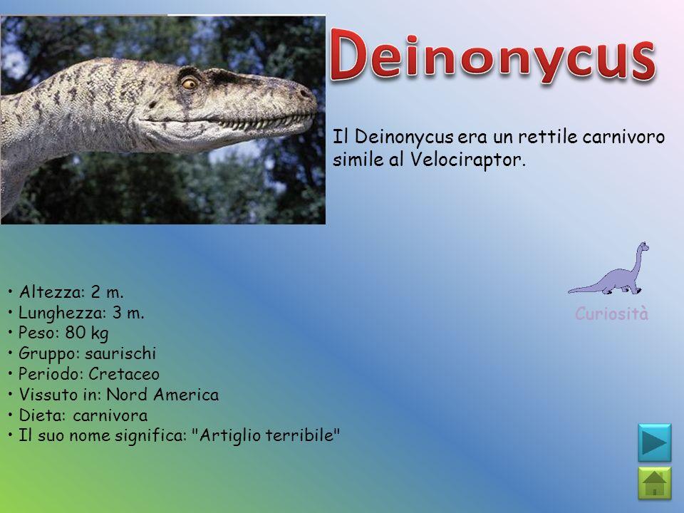 Deinonycus Il Deinonycus era un rettile carnivoro simile al Velociraptor. Curiosità. • Altezza: 2 m.