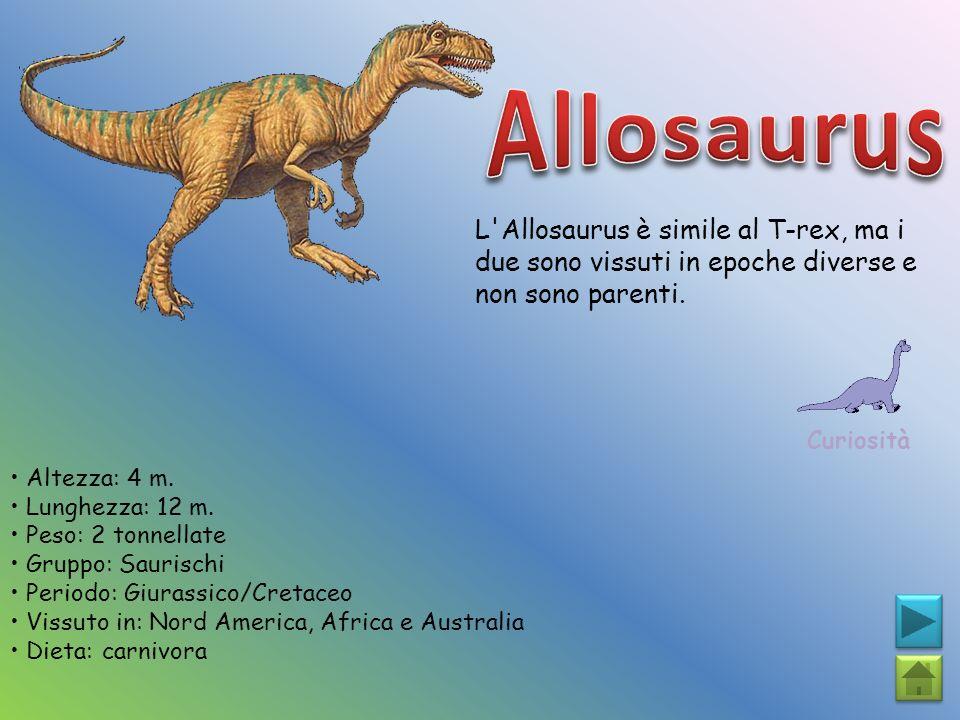 Allosaurus L Allosaurus è simile al T-rex, ma i due sono vissuti in epoche diverse e non sono parenti.