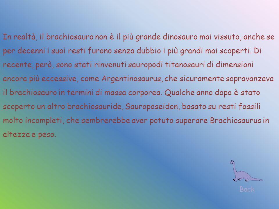 In realtà, il brachiosauro non è il più grande dinosauro mai vissuto, anche se per decenni i suoi resti furono senza dubbio i più grandi mai scoperti. Di recente, però, sono stati rinvenuti sauropodi titanosauri di dimensioni ancora più eccessive, come Argentinosaurus, che sicuramente sopravanzava il brachiosauro in termini di massa corporea. Qualche anno dopo è stato scoperto un altro brachiosauride, Sauroposeidon, basato su resti fossili molto incompleti, che sembrerebbe aver potuto superare Brachiosaurus in altezza e peso.