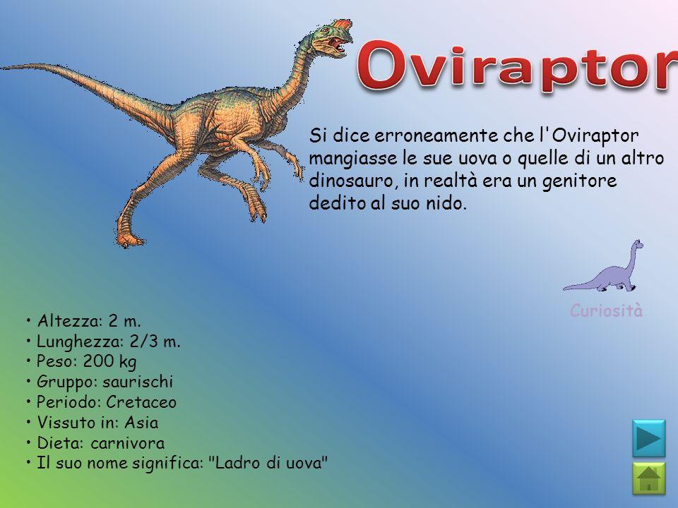 Oviraptor Si dice erroneamente che l Oviraptor mangiasse le sue uova o quelle di un altro dinosauro, in realtà era un genitore dedito al suo nido.