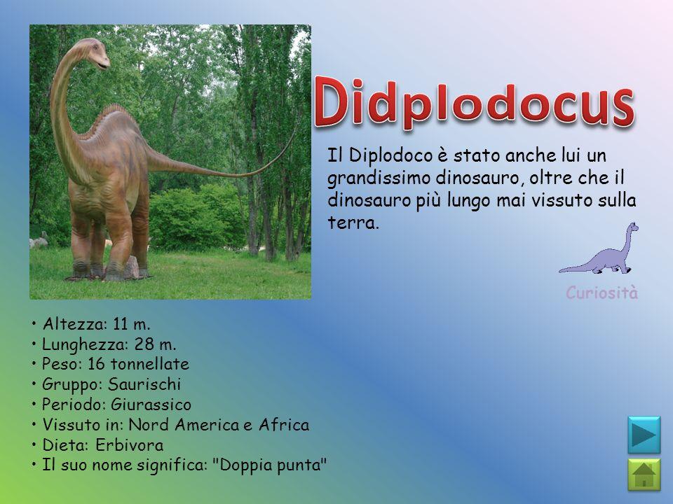 Didplodocus Il Diplodoco è stato anche lui un grandissimo dinosauro, oltre che il dinosauro più lungo mai vissuto sulla terra.