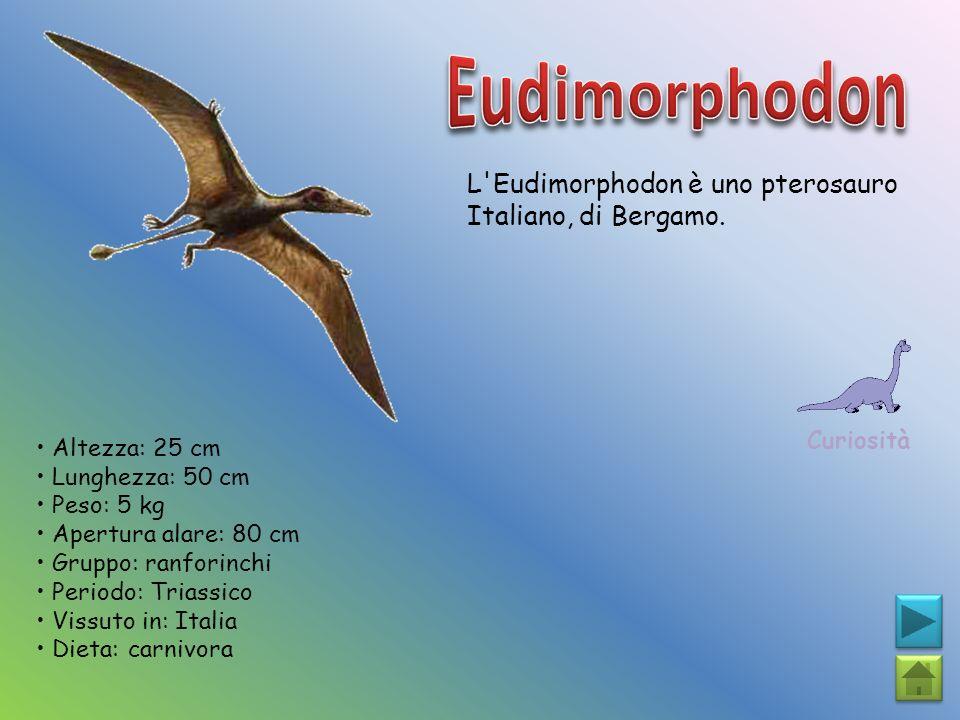 Eudimorphodon L Eudimorphodon è uno pterosauro Italiano, di Bergamo.