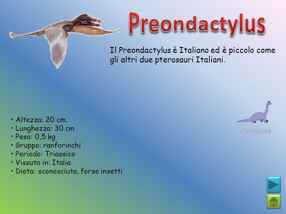 Preondactylus Il Preondactylus è Italiano ed è piccolo come gli altri due pterosauri Italiani. Curiosità.