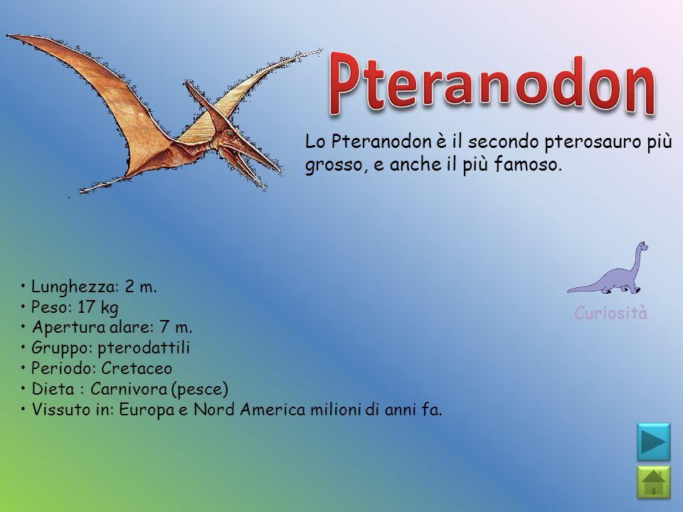 Pteranodon Lo Pteranodon è il secondo pterosauro più grosso, e anche il più famoso. Curiosità. • Lunghezza: 2 m.