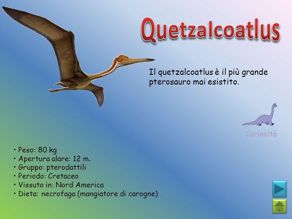 Quetzalcoatlus Il quetzalcoatlus è il più grande pterosauro mai esistito. Curiosità. • Peso: 80 kg.