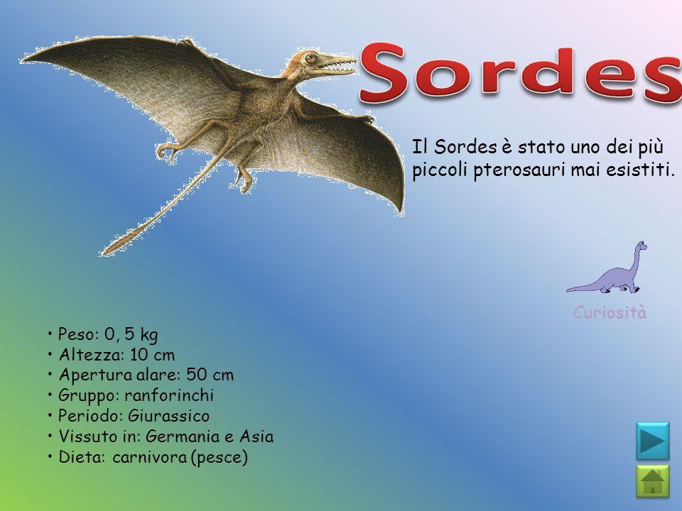 Sordes Il Sordes è stato uno dei più piccoli pterosauri mai esistiti.