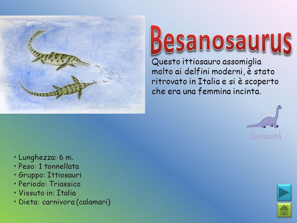 Besanosaurus Questo ittiosauro assomiglia molto ai delfini moderni, è stato ritrovato in Italia e si è scoperto che era una femmina incinta.