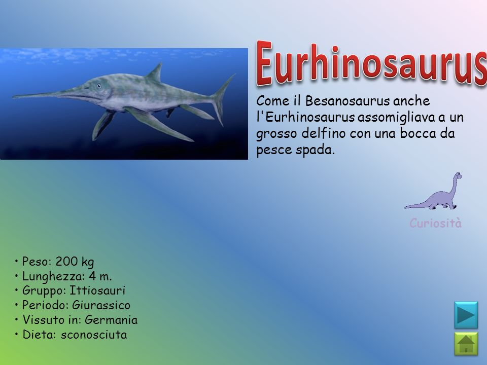 Eurhinosaurus Come il Besanosaurus anche l Eurhinosaurus assomigliava a un grosso delfino con una bocca da pesce spada.