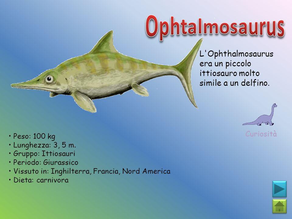Ophtalmosaurus L Ophthalmosaurus era un piccolo ittiosauro molto simile a un delfino. Curiosità. • Peso: 100 kg.