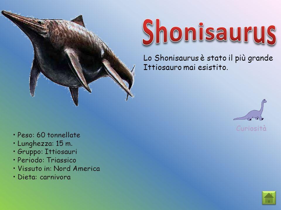Shonisaurus Lo Shonisaurus è stato il più grande Ittiosauro mai esistito. Curiosità. • Peso: 60 tonnellate.