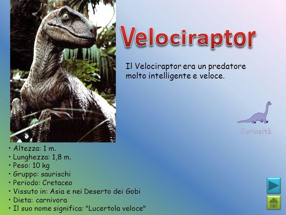 Velociraptor Il Velociraptor era un predatore molto intelligente e veloce. Curiosità. • Altezza: 1 m.