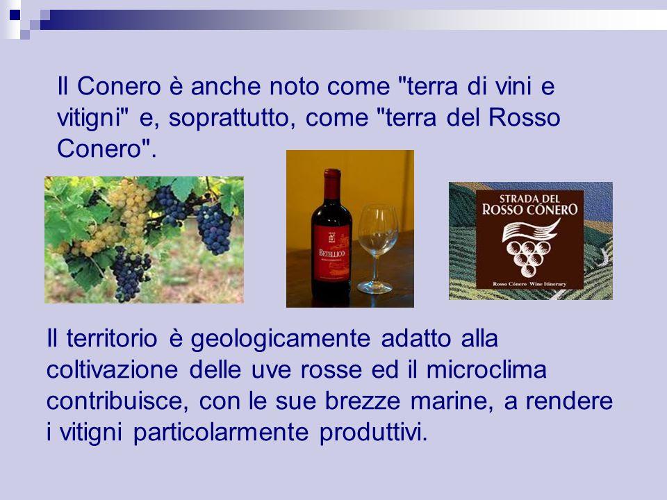 Il Conero è anche noto come terra di vini e vitigni e, soprattutto, come terra del Rosso Conero .