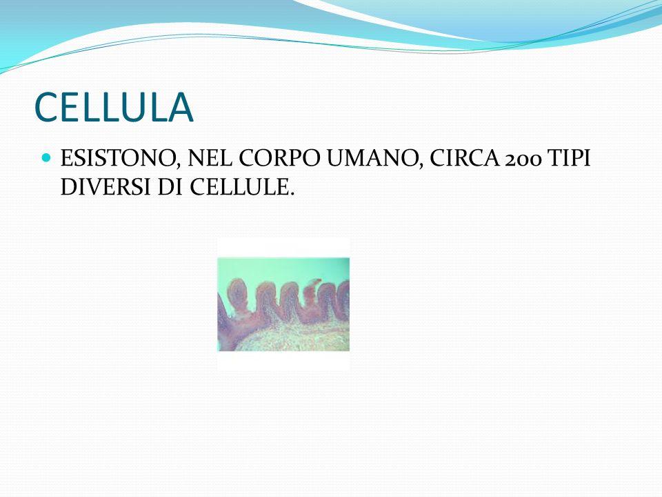 CELLULA ESISTONO, NEL CORPO UMANO, CIRCA 200 TIPI DIVERSI DI CELLULE.