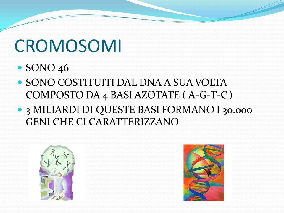 CROMOSOMI SONO 46. SONO COSTITUITI DAL DNA A SUA VOLTA COMPOSTO DA 4 BASI AZOTATE ( A-G-T-C )