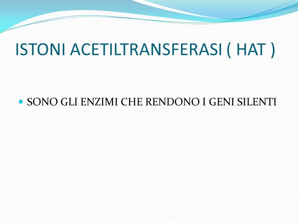 ISTONI ACETILTRANSFERASI ( HAT )