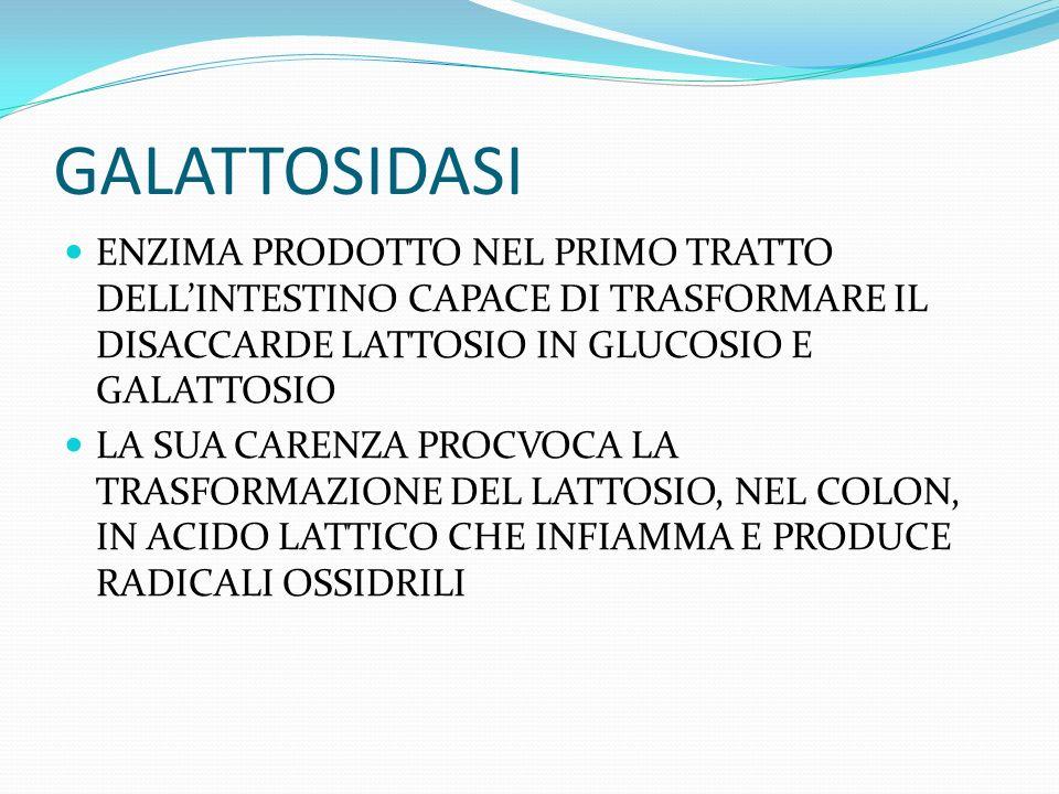 GALATTOSIDASI ENZIMA PRODOTTO NEL PRIMO TRATTO DELL'INTESTINO CAPACE DI TRASFORMARE IL DISACCARDE LATTOSIO IN GLUCOSIO E GALATTOSIO.