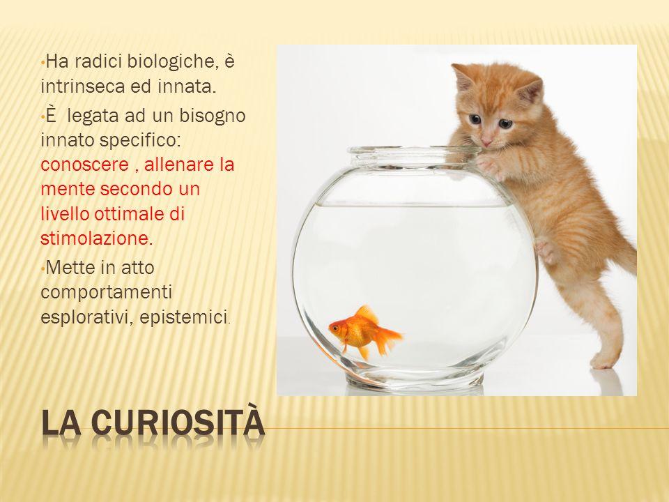 La curiosità Ha radici biologiche, è intrinseca ed innata.