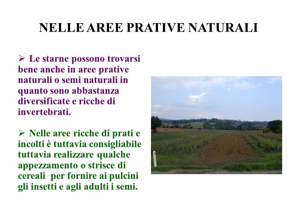 NELLE AREE PRATIVE NATURALI