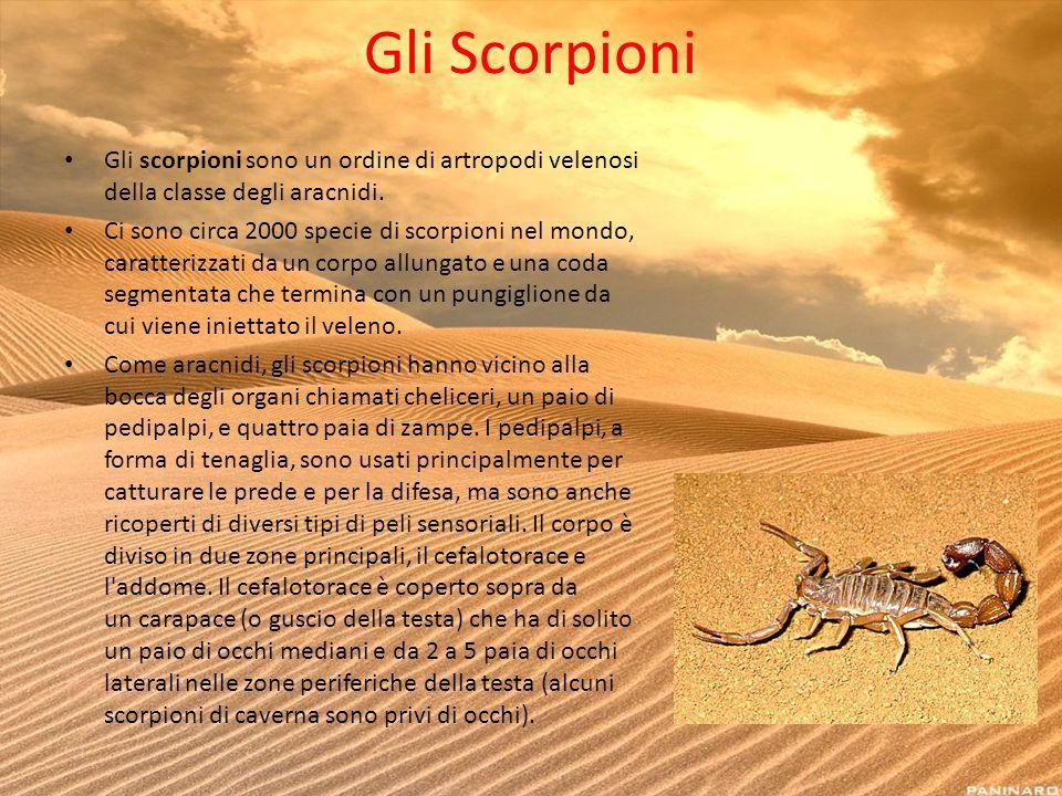 Gli Scorpioni Gli scorpioni sono un ordine di artropodi velenosi della classe degli aracnidi.