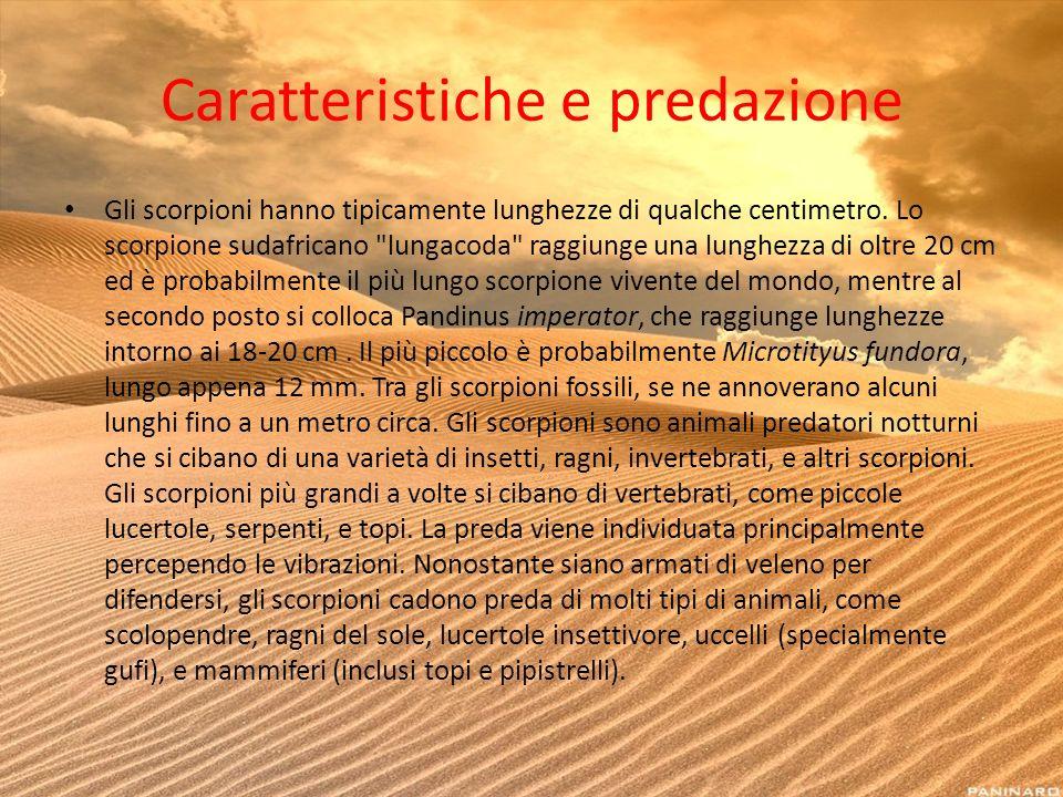 Caratteristiche e predazione