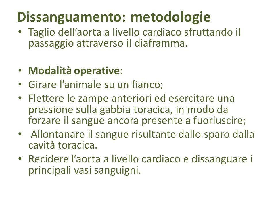 Dissanguamento: metodologie