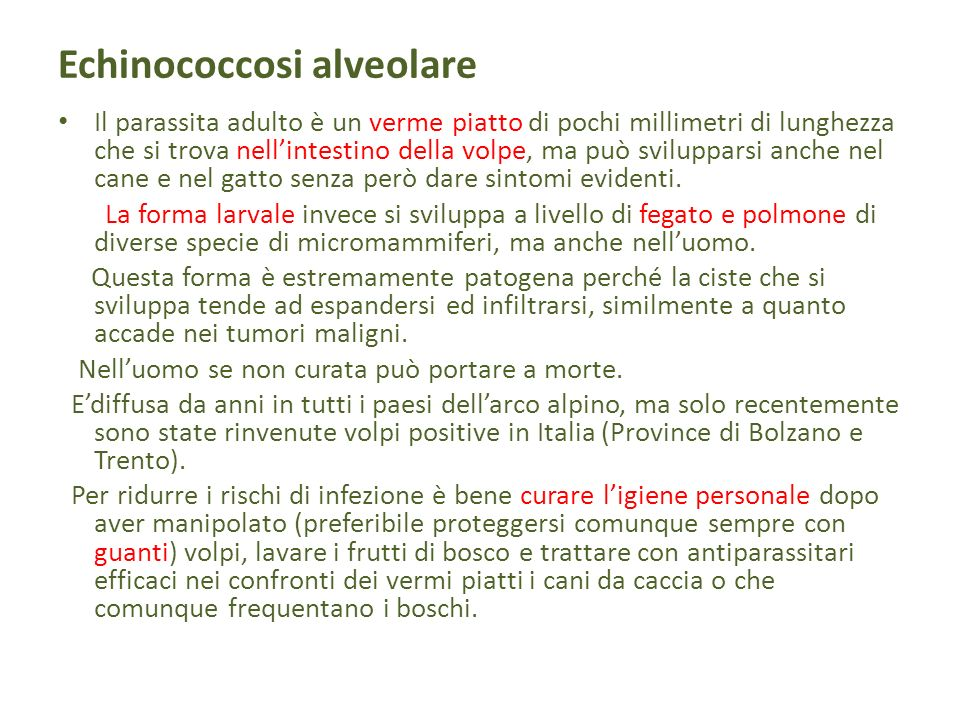 Echinococcosi alveolare