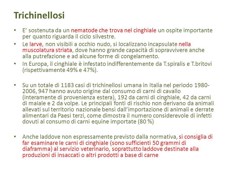 TrichinellosiE' sostenuta da un nematode che trova nel cinghiale un ospite importante per quanto riguarda il ciclo silvestre.