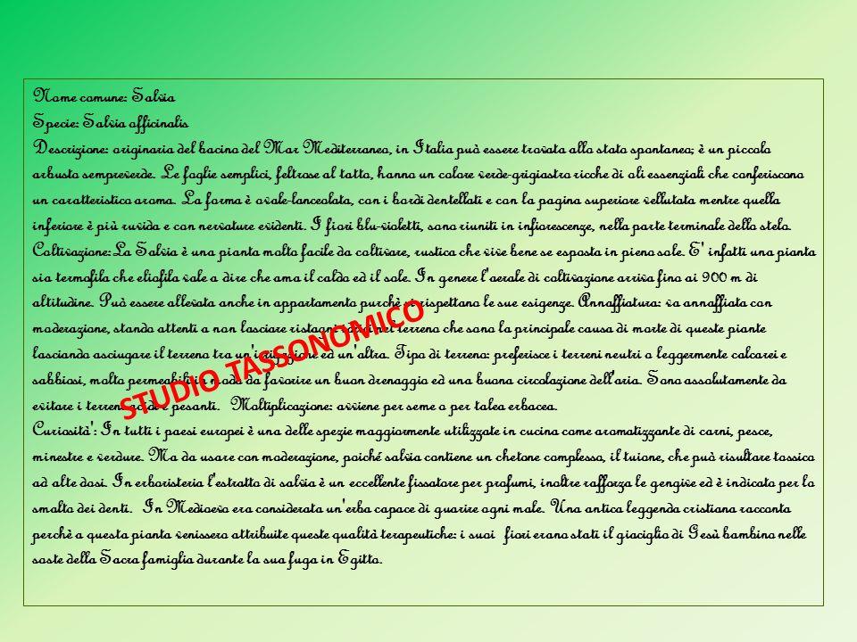 STUDIO TASSONOMICO Nome comune: Salvia Specie: Salvia officinalis