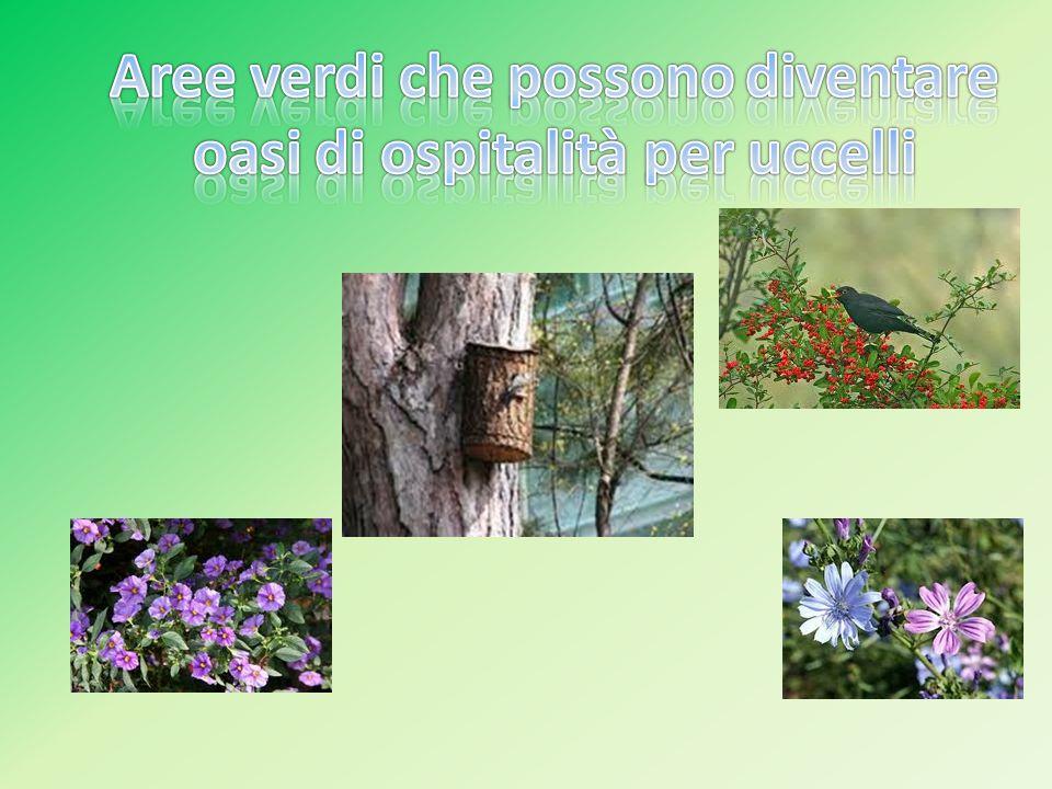 Aree verdi che possono diventare oasi di ospitalità per uccelli