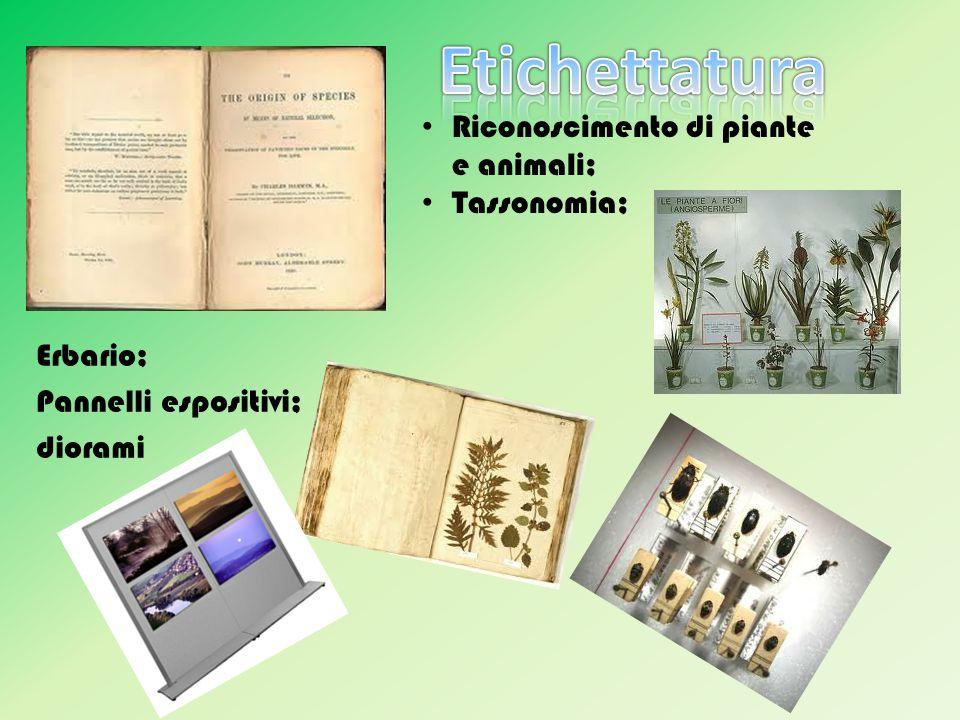 Etichettatura Riconoscimento di piante e animali; Tassonomia;