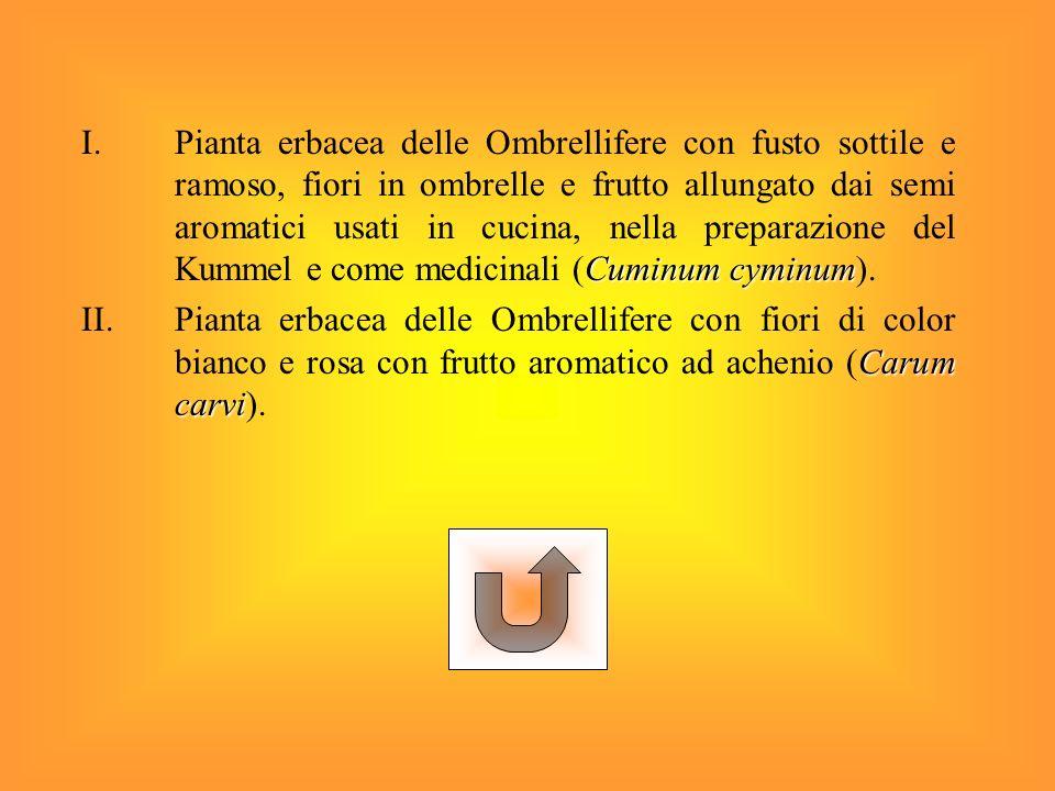 Pianta erbacea delle Ombrellifere con fusto sottile e ramoso, fiori in ombrelle e frutto allungato dai semi aromatici usati in cucina, nella preparazione del Kummel e come medicinali (Cuminum cyminum).