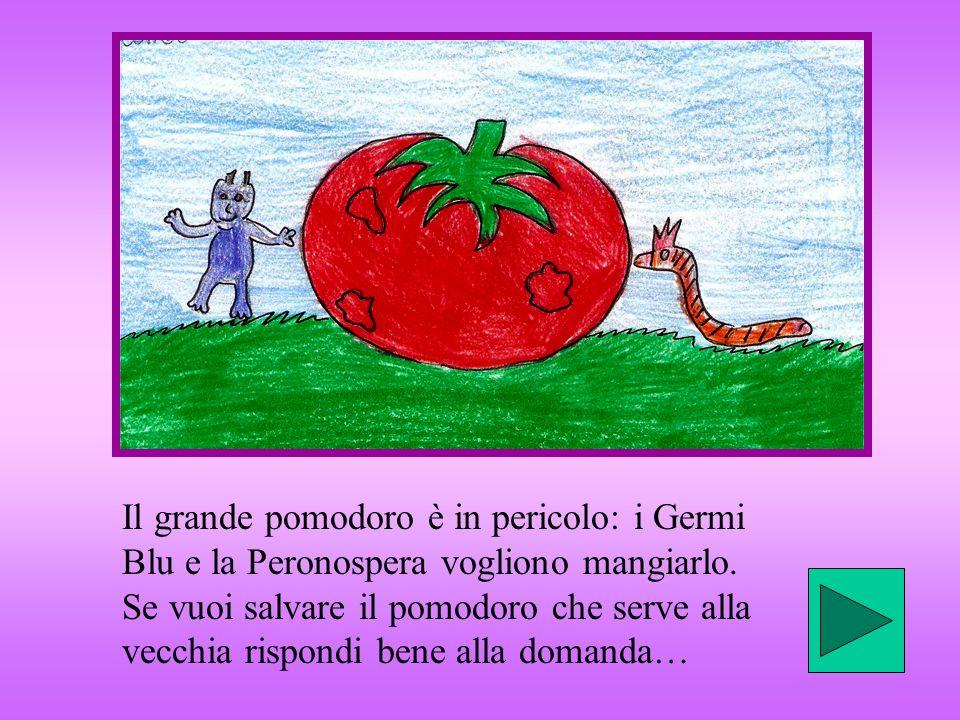 Il grande pomodoro è in pericolo: i Germi Blu e la Peronospera vogliono mangiarlo.