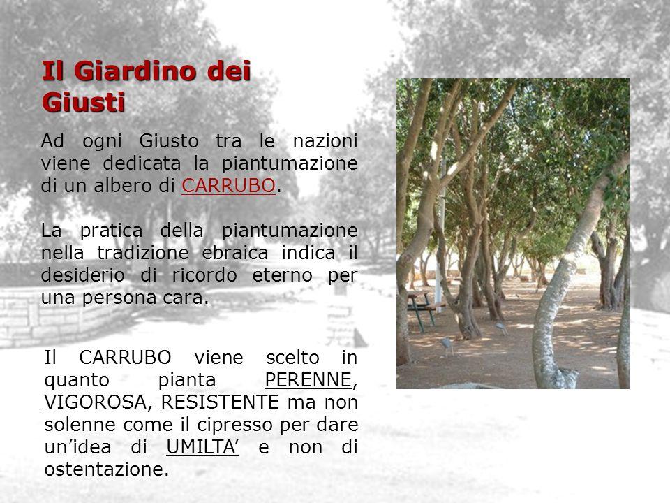 Il Giardino dei Giusti Ad ogni Giusto tra le nazioni viene dedicata la piantumazione di un albero di CARRUBO.