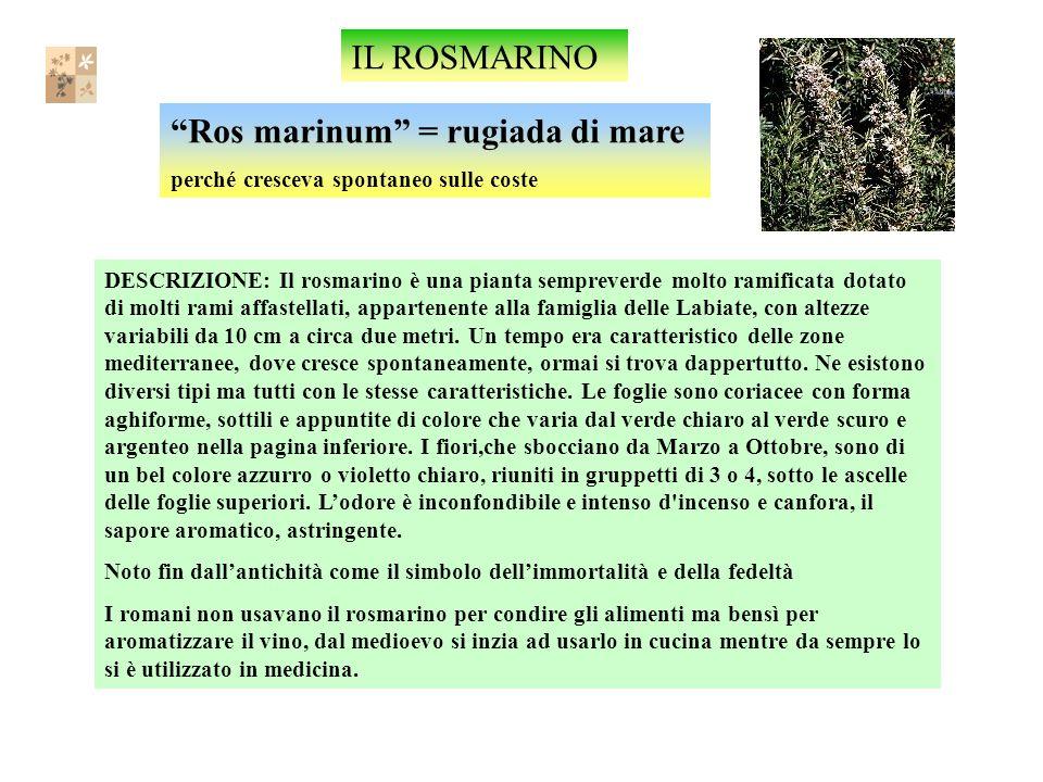 Ros marinum = rugiada di mare