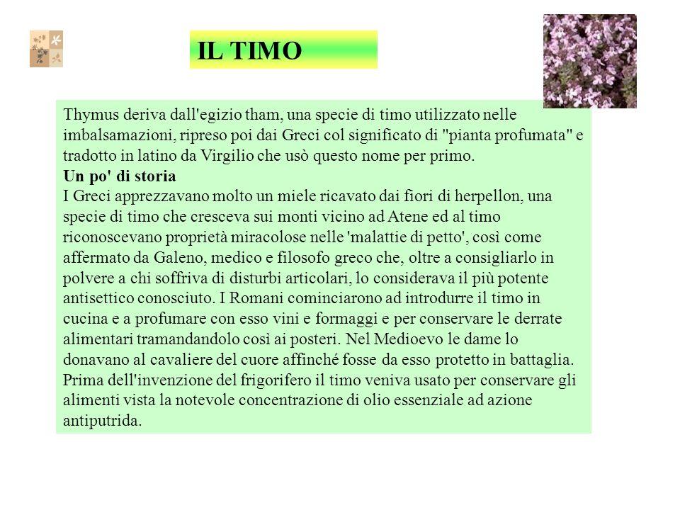 IL TIMO