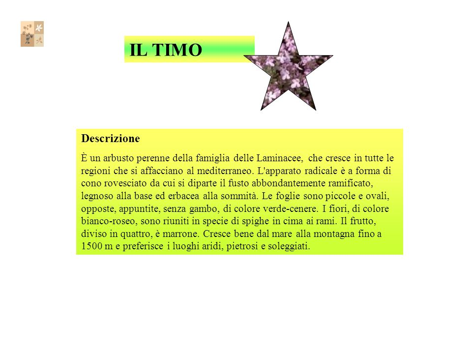 IL TIMO Descrizione.