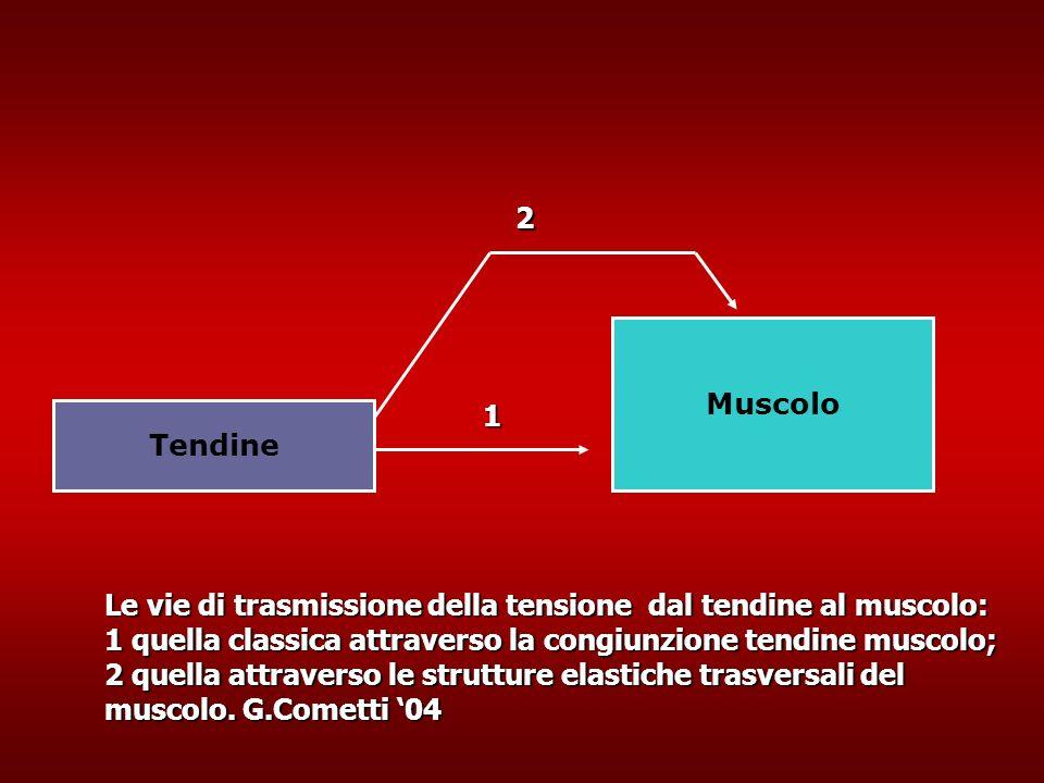 2 Muscolo. 1. Tendine.