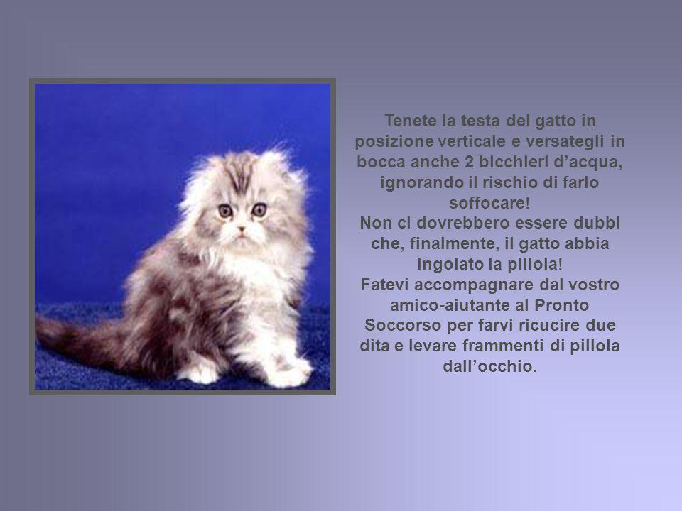 Tenete la testa del gatto in posizione verticale e versategli in bocca anche 2 bicchieri d'acqua, ignorando il rischio di farlo soffocare.