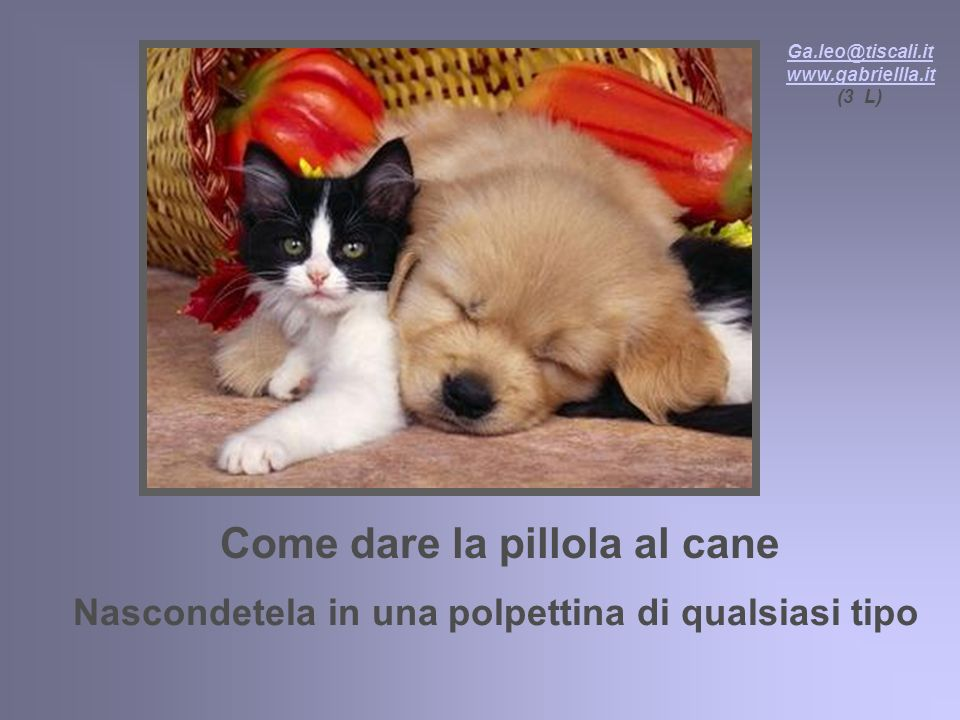 Come dare la pillola al cane