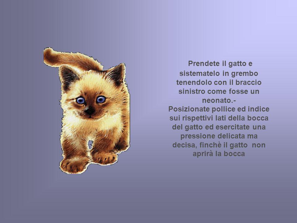 Prendete il gatto e sistematelo in grembo tenendolo con il braccio sinistro come fosse un neonato.- Posizionate pollice ed indice sui rispettivi lati della bocca del gatto ed esercitate una pressione delicata ma decisa, finchè il gatto non aprirà la bocca