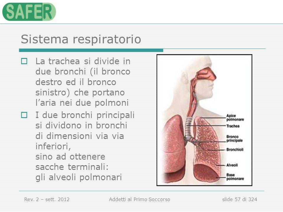 Sistema respiratorio La trachea si divide in due bronchi (il bronco destro ed il bronco sinistro) che portano l'aria nei due polmoni.