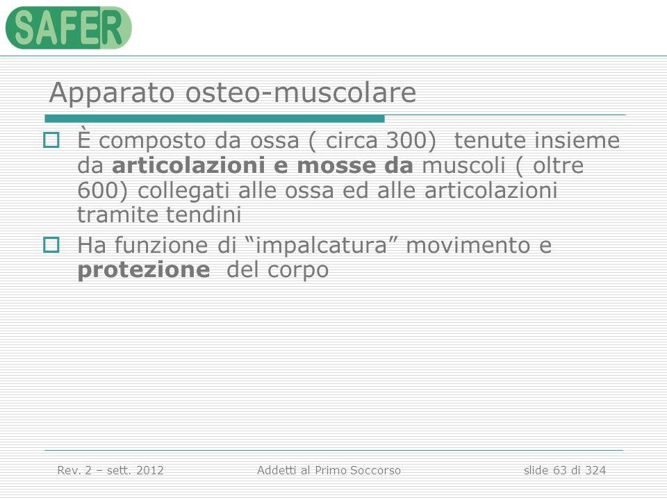 Apparato osteo-muscolare