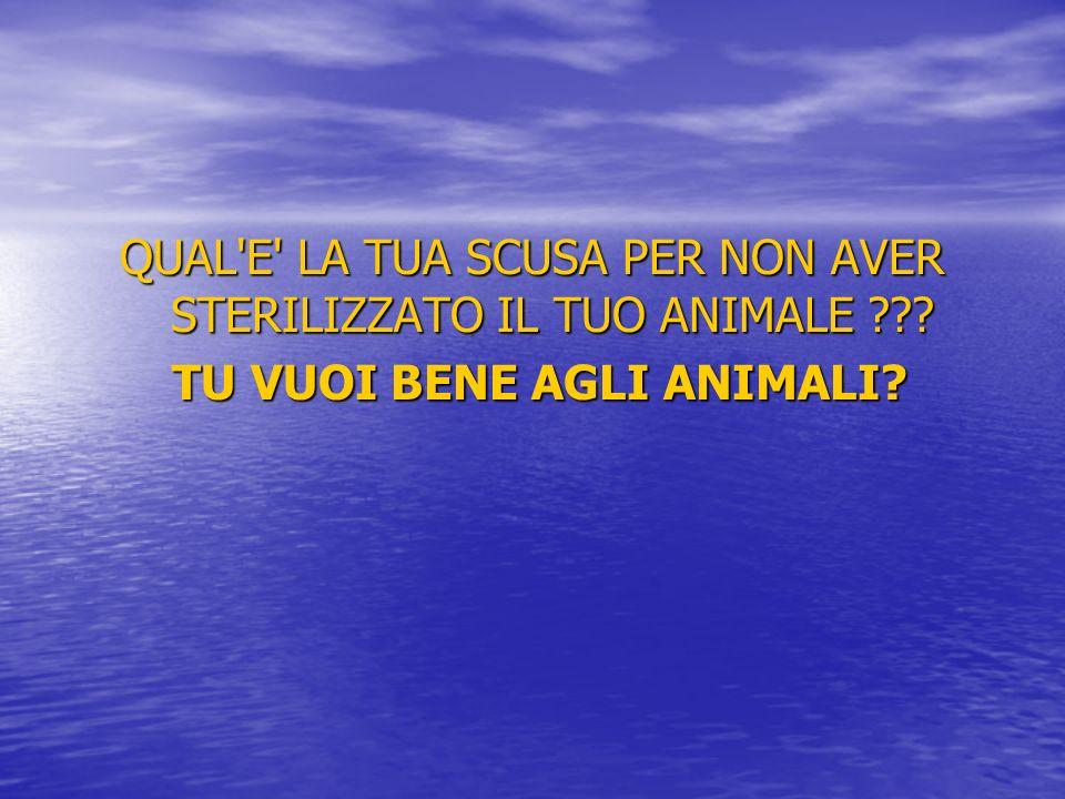 TU VUOI BENE AGLI ANIMALI