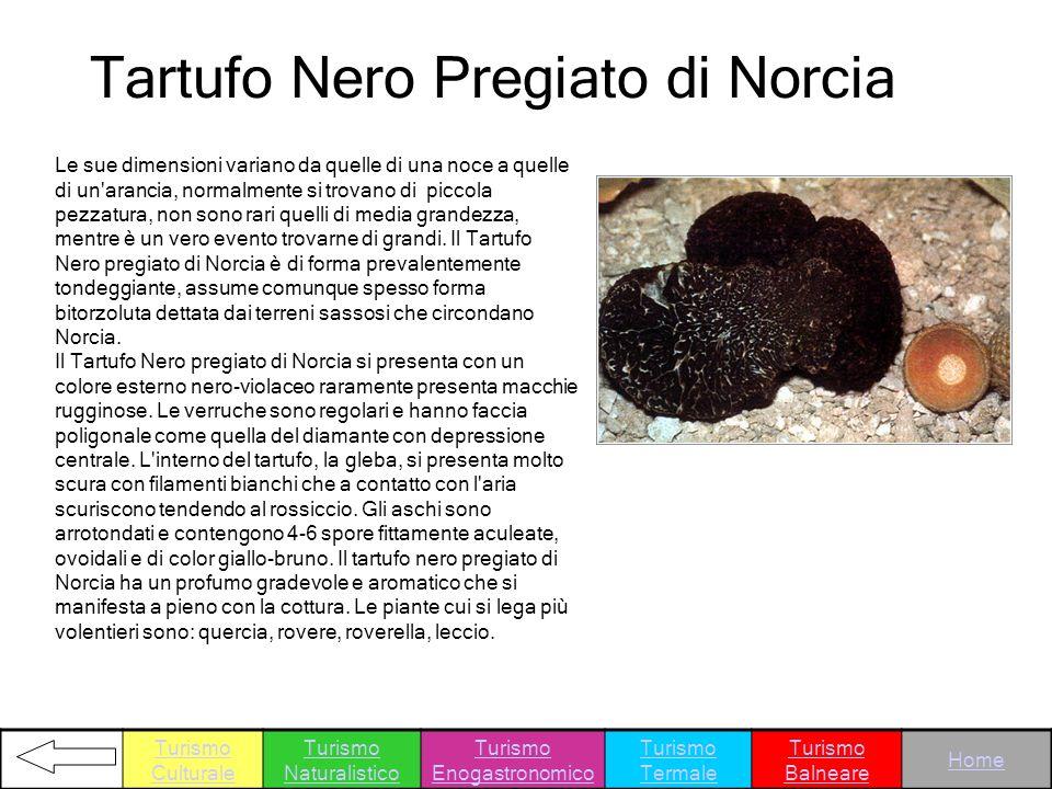 Tartufo Nero Pregiato di Norcia
